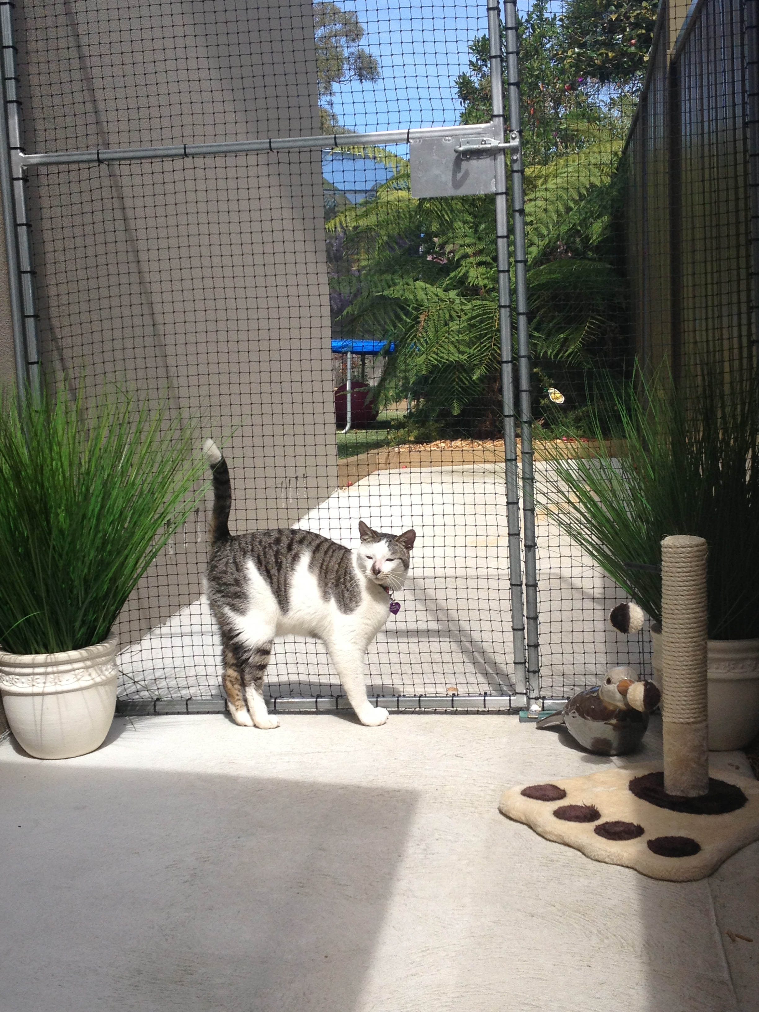 Caringbah Cat Hotel - Accommodation Australia