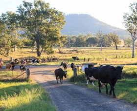 Tommerups Dairy Farmstay - Accommodation Australia