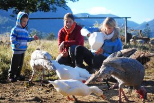 Cedar Glen Farmstay - Accommodation Australia