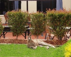 Alpha Canberra Hotel - Accommodation Australia