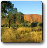 Uluru - Kata Tjuta National Park - Accommodation Australia