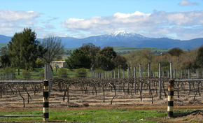 Buller View Wines - Accommodation Australia