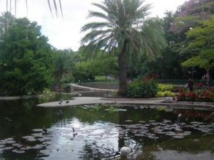 Brisbane City Botanic Gardens - Accommodation Australia