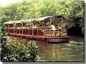 Daintree Rainforest River Trains - Accommodation Australia