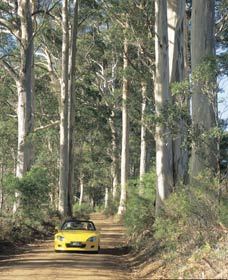 Scotsdale Tourist Drive - Accommodation Australia