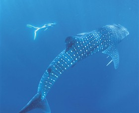 Ningaloo Marine Park - Accommodation Australia