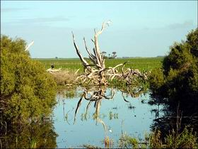 Bool Lagoon Game Reserve and Hacks Lagoon Conservation Park - Accommodation Australia