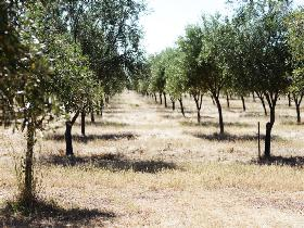 Talinga Grove Olive Oils - Accommodation Australia