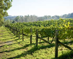 Surveyor's Hill Vineyards - Accommodation Australia