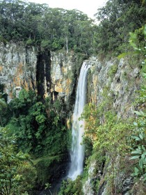 Gondwana Rainforests of Australia - Accommodation Australia
