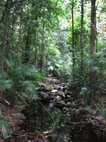 Mossman Gorge Rainforest Circuit Track Daintree National Park - Accommodation Australia