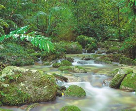Mossman Gorge Daintree National Park - Accommodation Australia