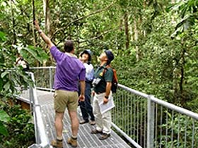 Daintree Discovery Centre - Accommodation Australia