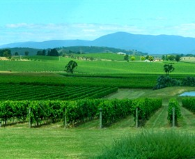 Acacia Ridge Vineyard - Accommodation Australia