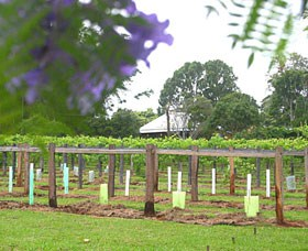 Douglas Vale Historic Homestead  Vineyard - Accommodation Australia