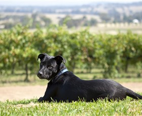 Moothi Estate Vineyard and Cellar Door - Accommodation Australia