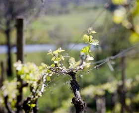 Mount Cole WineWorks - Accommodation Australia