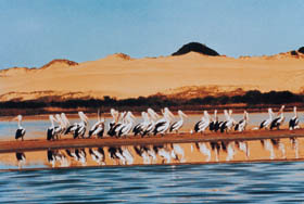 Coorong National Park - Accommodation Australia