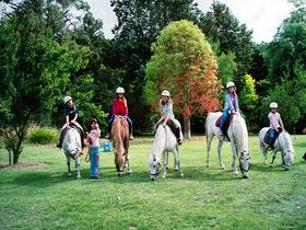 Limestone Coast Horseriding - Accommodation Australia