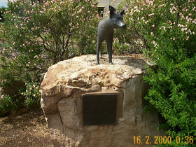 Dingo Statue - Accommodation Australia