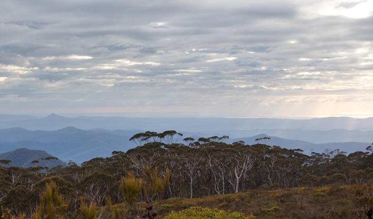 Mount Budawang trail - Accommodation Australia