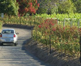 Cassegrain Wines - Accommodation Australia
