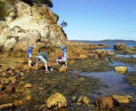 Sapphire Coast Marine Discovery Centre - Accommodation Australia