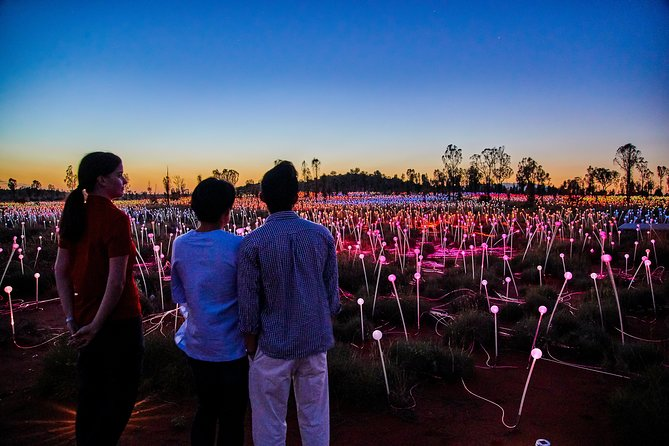 Uluru Field of Light Sunrise Tour - Accommodation Australia