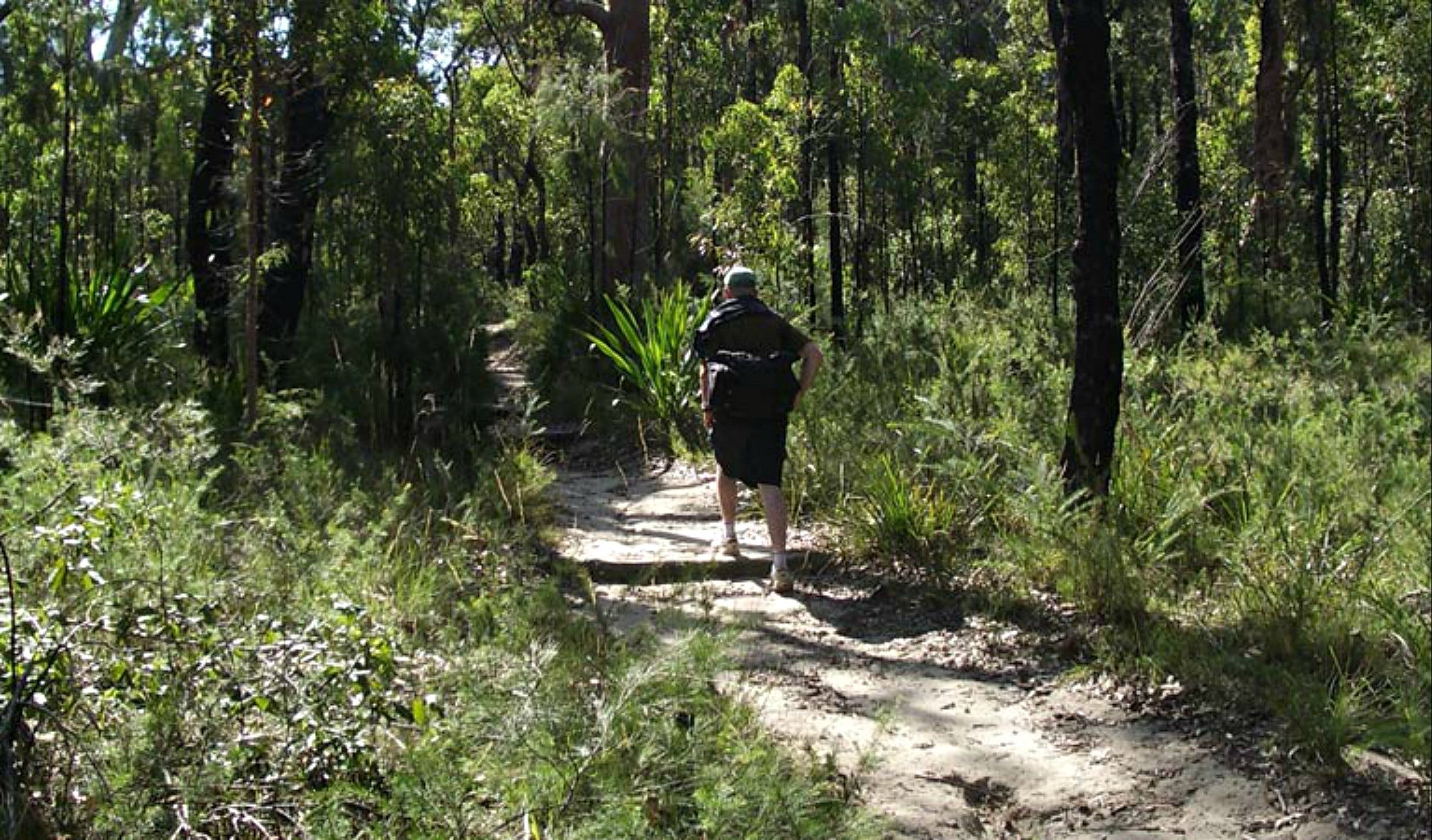 Karloo Walking Track - Accommodation Australia