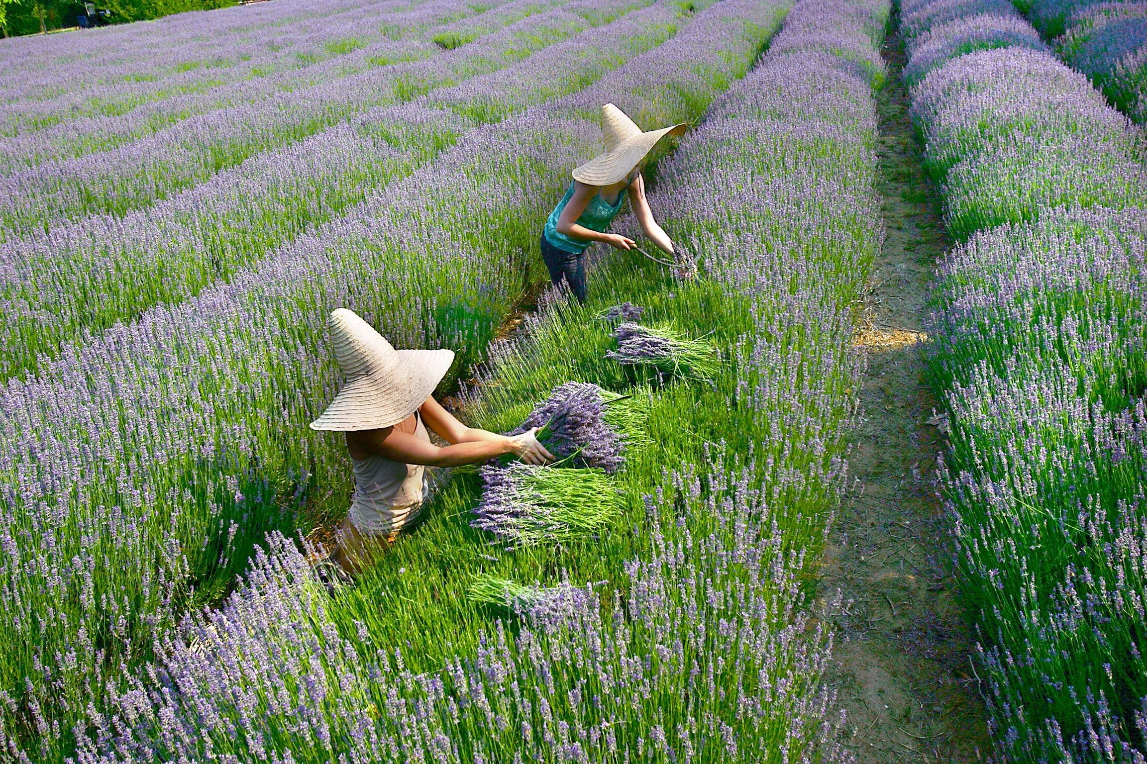 Lavandula Swiss Italian Farm - Accommodation Australia
