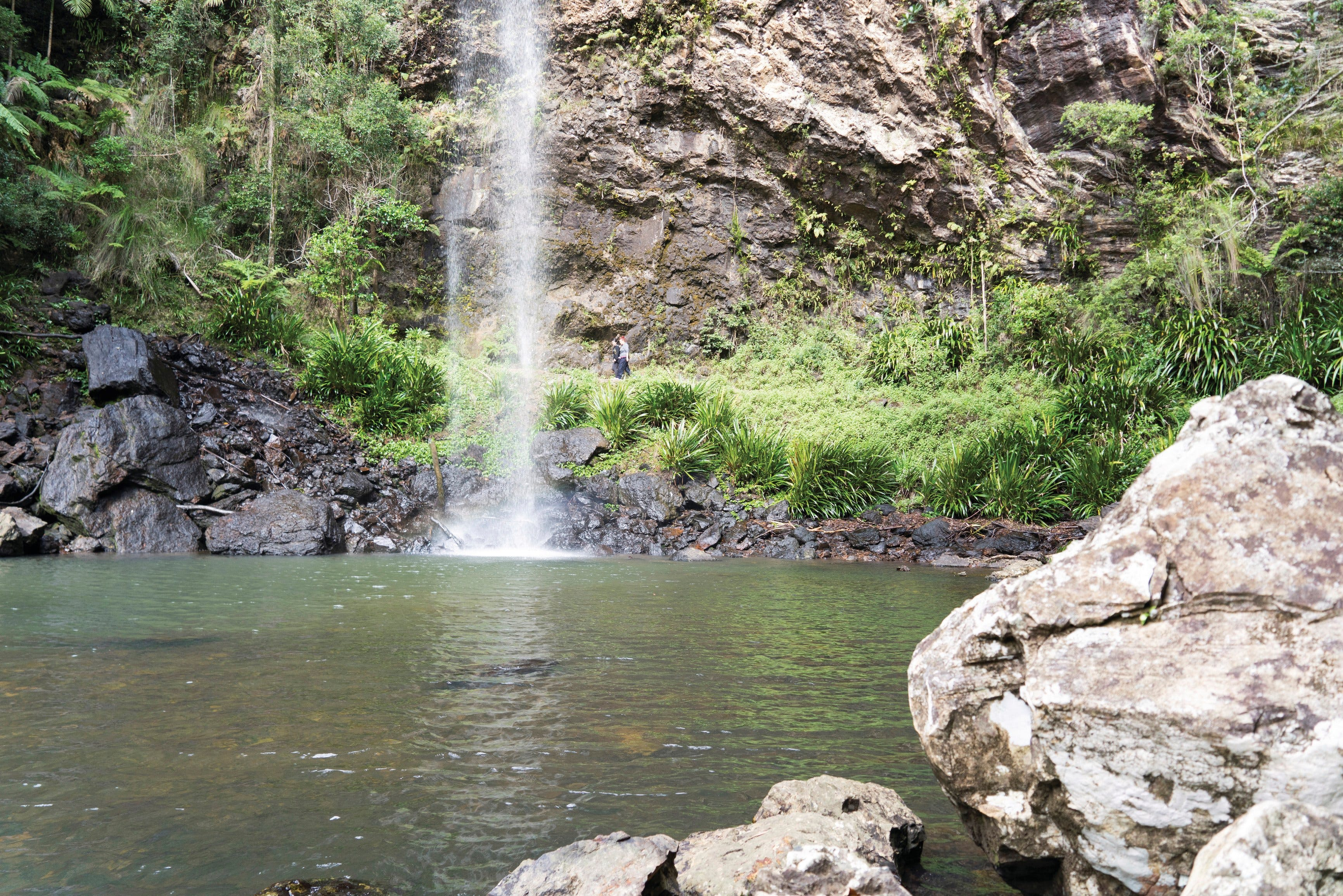 Twin Falls Circuit Springbrook National Park - Accommodation Australia