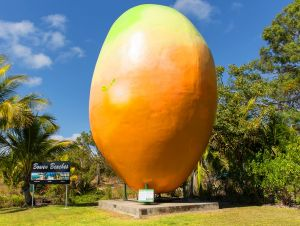 Big Mango - Accommodation Australia