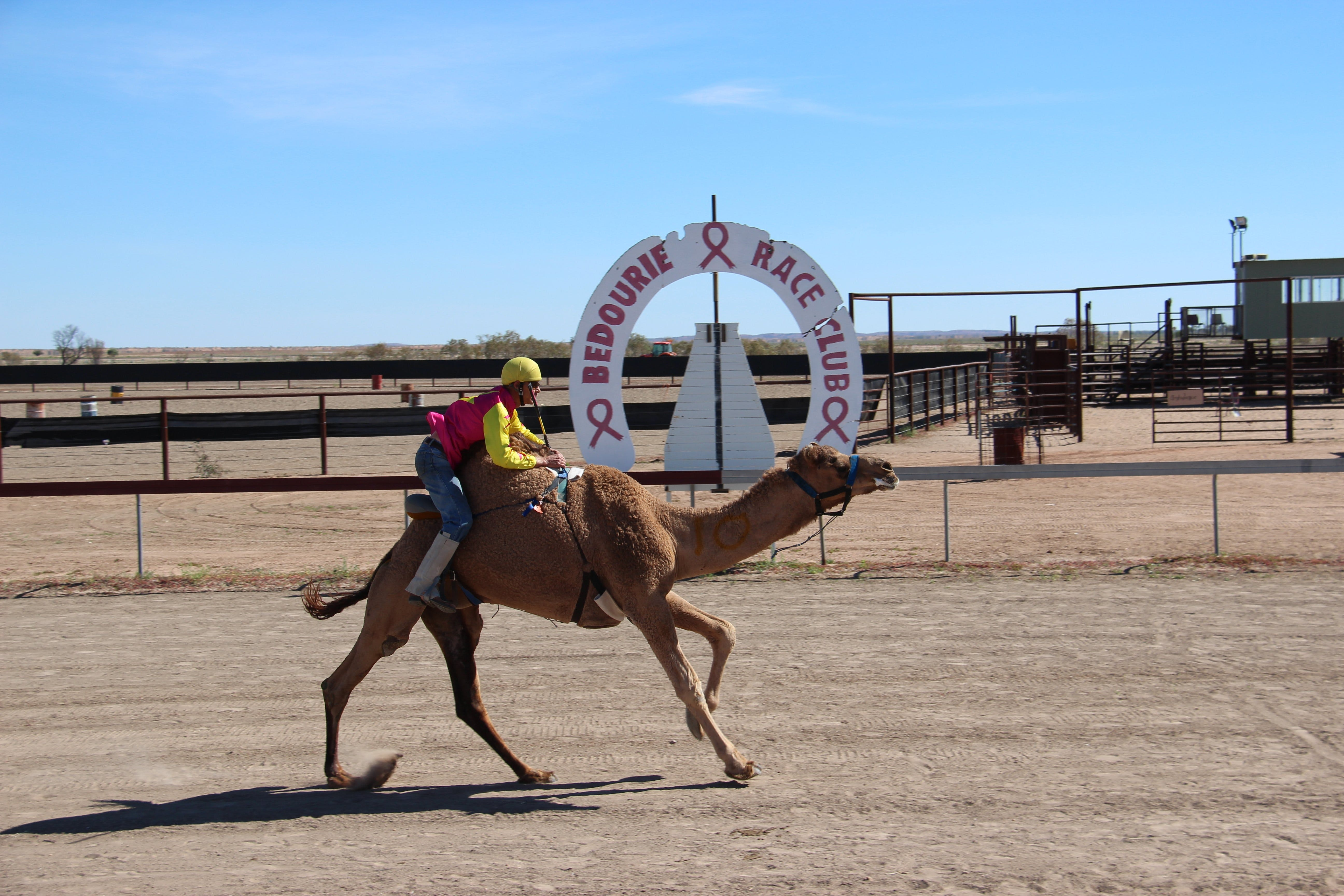 Bedourie Camel and Pig Races and Camp oven Cook-off - Accommodation Australia