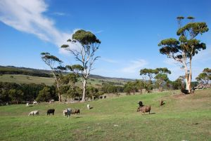 Lisieux Farm Bed and Breakfast - Accommodation Australia